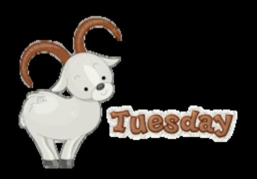 DOTW Tuesday - BighornSheep