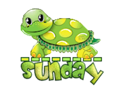 DOTW Sunday - CuteTurtle