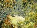 Capertee Valley 100108 011