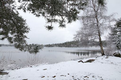 Fagraholm Nature Reserve 2019 March (11)