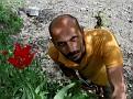 Tulipa agenensis (55)