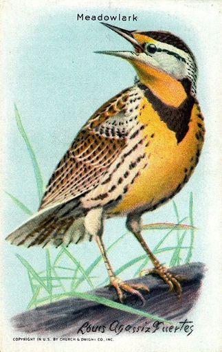 1938 Useful Birds of America Series 10 #01 (1)