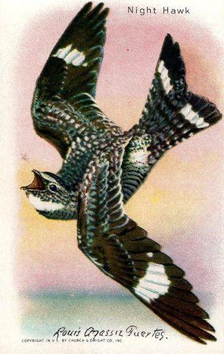 1938 Useful Birds of America Series 10 #13 (1)