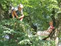 Young Tree Tourists of Sighisoara, Romania.