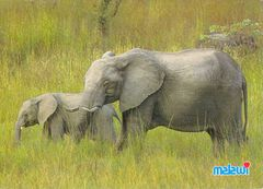 Malawi - ELEPHANT NA