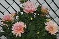 Les jolies fleurs.
