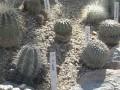 Vystava kaktusu 2005 (9)