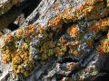Lichen on a log
